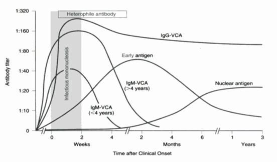 Azithromycin and mononucleosis