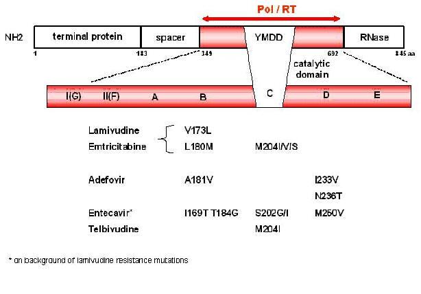 methylprednisolone 500 mg/vial